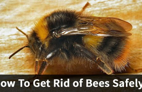How To Get Rid Of Bees Safely?