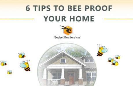Tips to Bee Proof your home