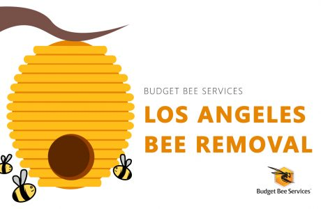 Los Angeles Bee Removal